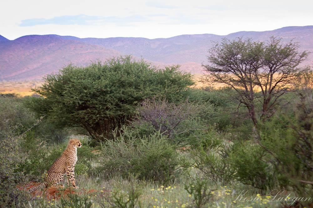 Tswalu Field Guide Image